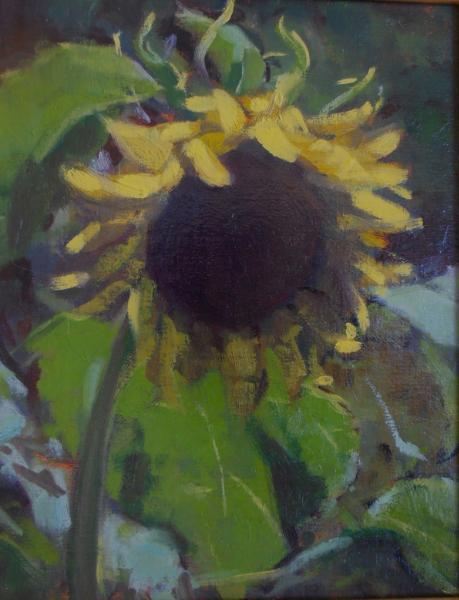 "Sunflower 8x10"" oil"