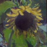 "Sunflower 8x10"" oil"