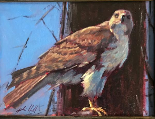"Red Hawk 12x16"" sold"
