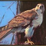 "Red Hawk 12x16"" sold"