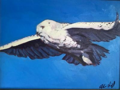 """Snowy Owl in Flight 12x16"""" oil sold"""