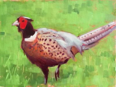 "Don's Pheasant 8x10"" oil"
